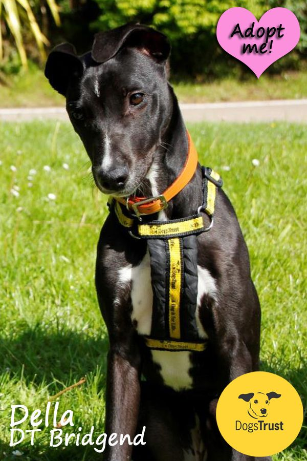 Bridgend Dogs Trust Dogs For Adoption Uk Dogs