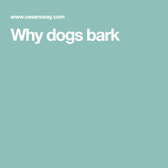 Why dogs bark
