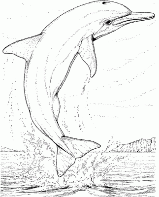Dibujos De Delfines A Lapiz 6 Dolphin Coloring Pages Dolphin Drawing Colorful Drawings