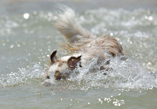 Free Image on Pixabay Dog, Puppy, Pet, Animal, Cute