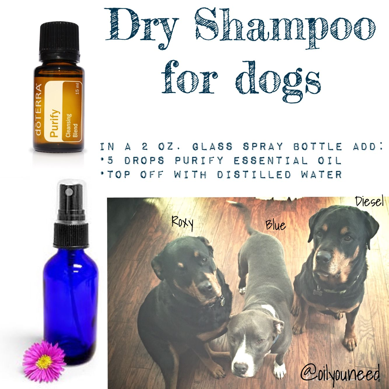 Dry Shampoo For Dogs Dōterra Also Works For Purifying Bedding Pillow Laundry Shoes For Essential Oil Recipes Essential Oils Dogs Are Essential Oils Safe
