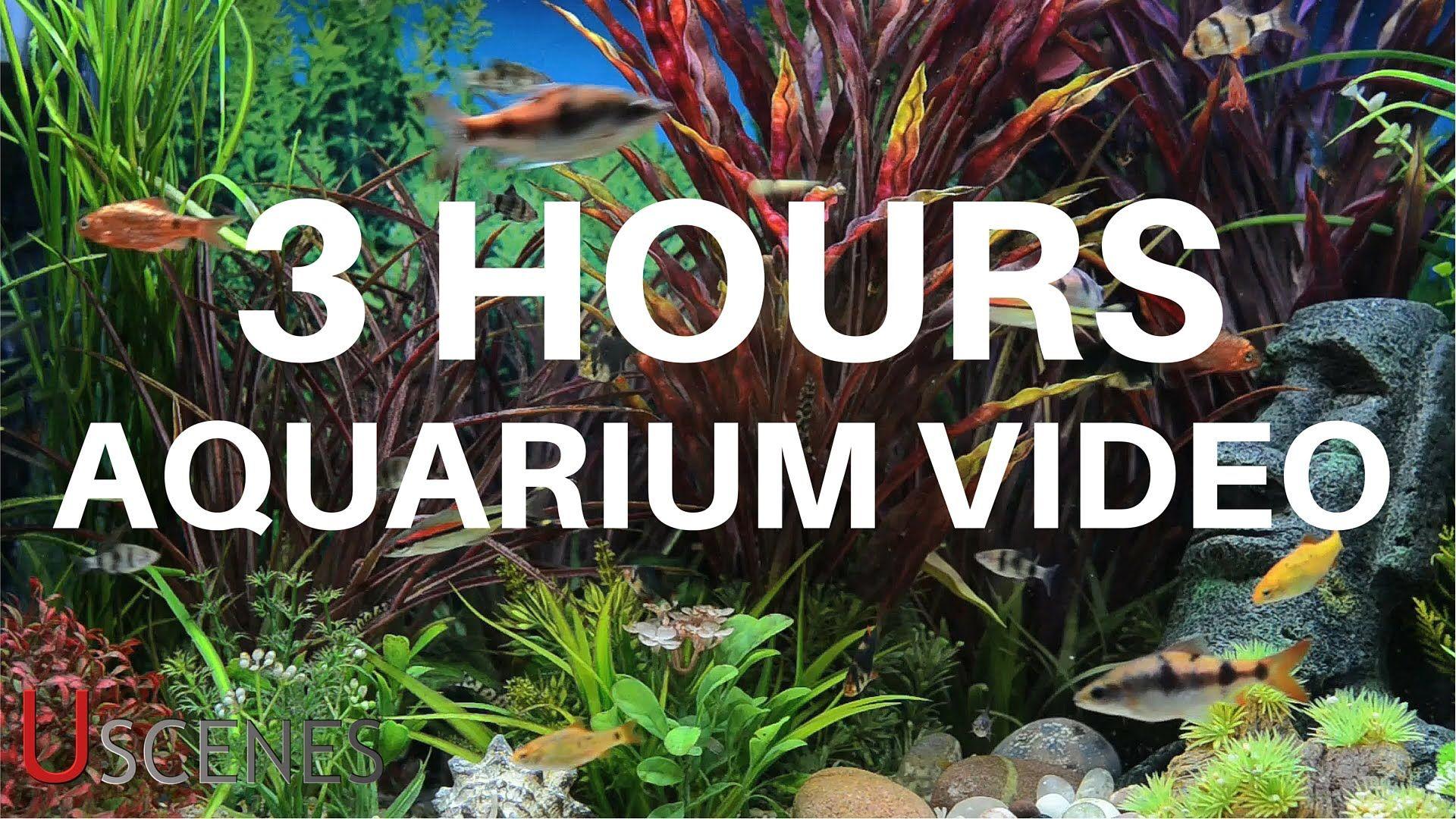 3 Hour Aquarium Video by Uscenes FREE TV SCREENSAVER Hogar