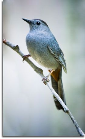 A pretty blue bird perched on a branch.