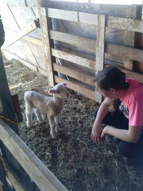 A girl and her lamb! With Ross Sheep Farm, Rose, Oklahoma