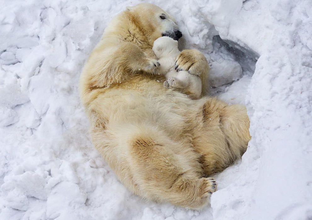 Animales cuidando de sus pequeños