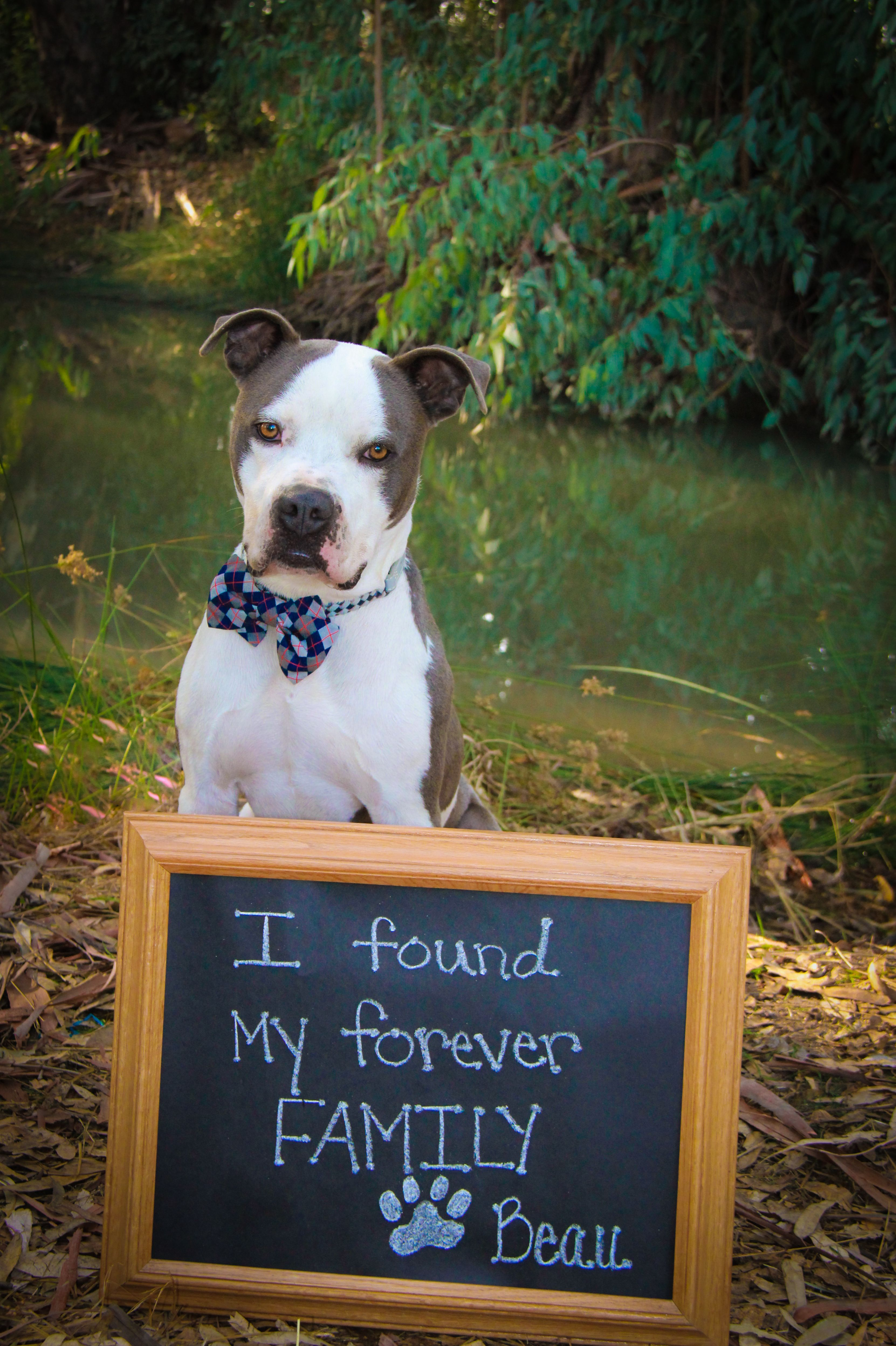 """Adoption announcement of a new dog. """"Thanks for helping me"""