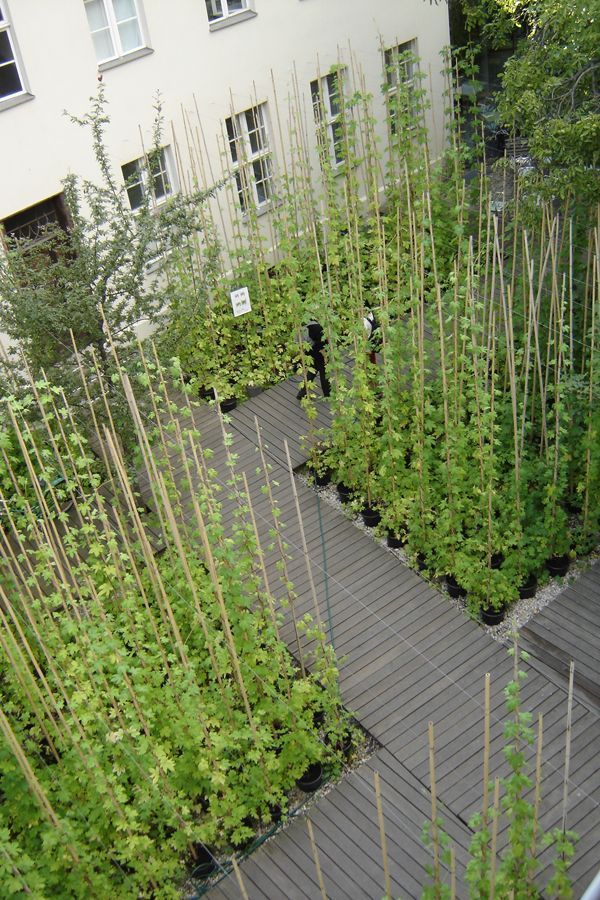 Le Balto - Kunst Werke 01 ARQurbano Pinterest Jardinería - diseo de jardines urbanos