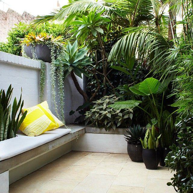 tropical city courtyard