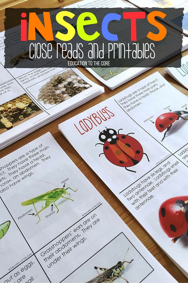 Insect Activities And Nonfiction Texts For Primary Students Insect Activities Primary Students Science Activities For Kids