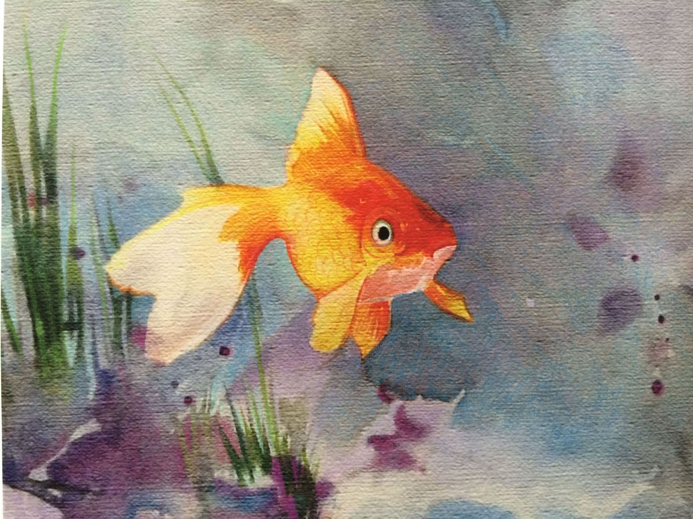 Golden Goldfish Watercolor Art By Susan Iwakoshi Www