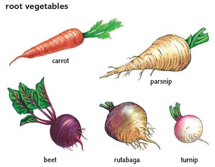 Vegetable Definition