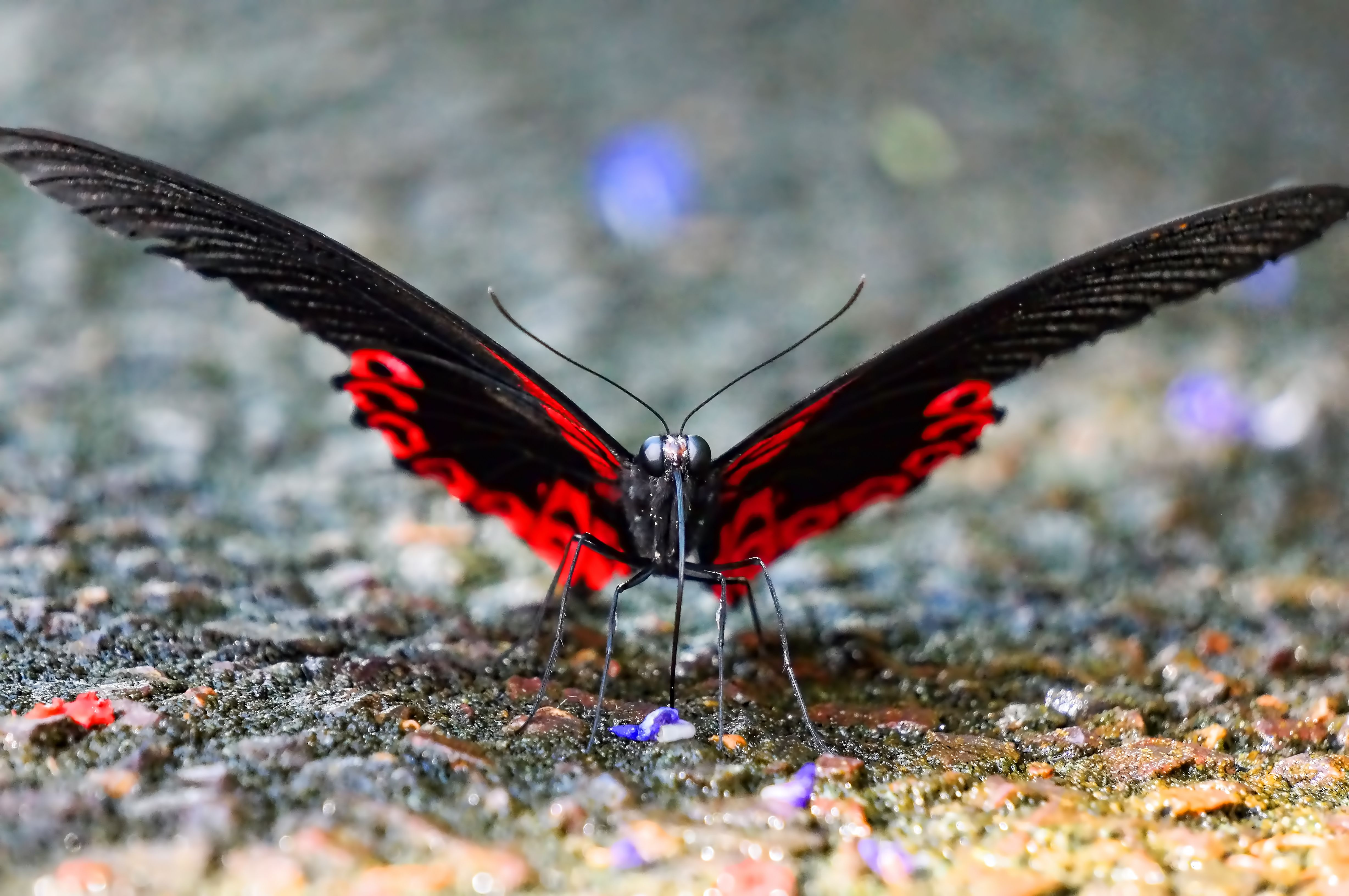 Butterfly Insect photography, Animals, Insects