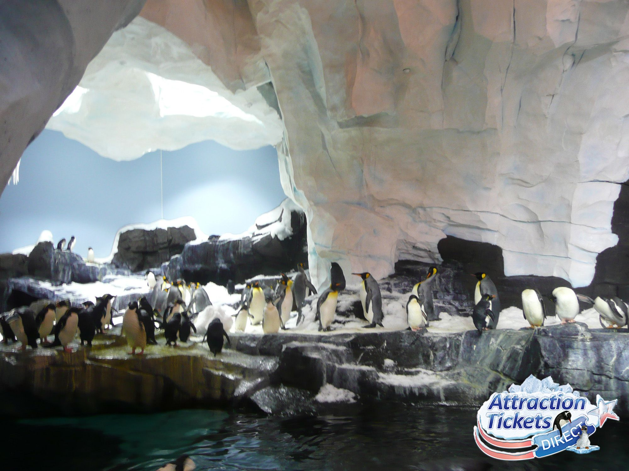SeaWorld Antarctica Empire of the Penguin #SeaWorld #Pinguins