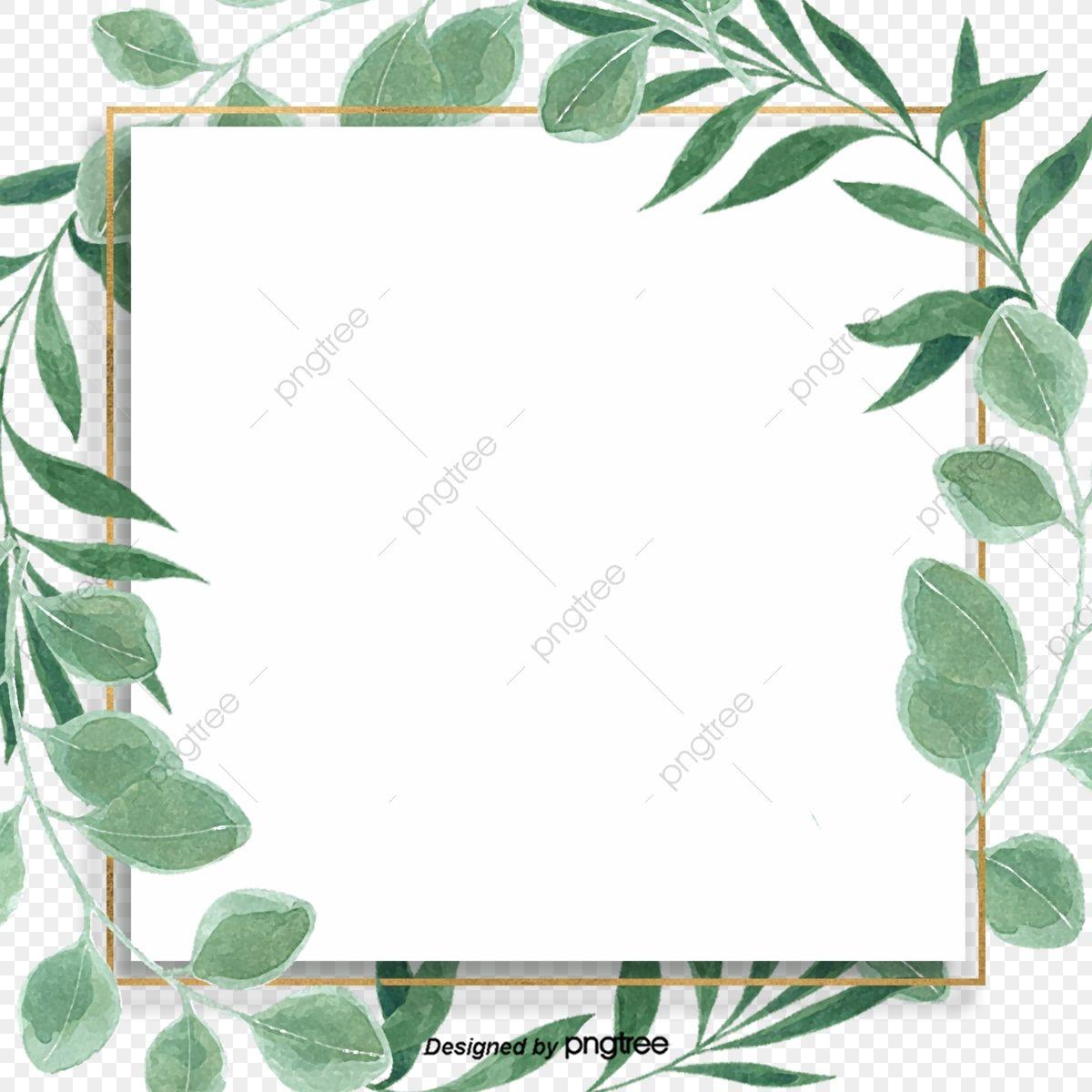 Zielony Maly Orzezwiajacy Lisc Eukaliptusa Granicy Tla Eukaliptus Lisc Liscie Eukaliptusa Png I Plik Psd Do Pobrania Za Darmo Poster Bunga Latar Belakang Kayu Putih