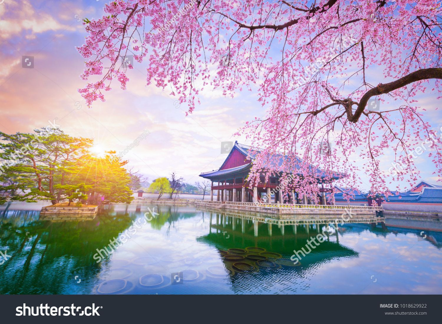 Gyeongbokgung Palace With Cherry Blossom Tree In Spring Time In Seoul City Of Korea South Best Solo Travel Destinations Solo Travel Destinations Korea Travel