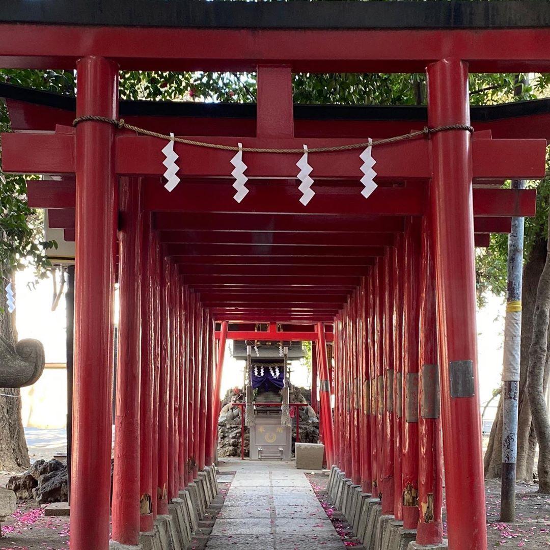 Exploring and embracing the serenity of both Hanazono-Jinja and Meiji Jingu Shrines today. ⛩📿🙏 #toriigates #kitsune #shintoshrine #meijijingu #positiveenergy #healthyliving #kaizen #zenlife #livetoexplore #ilovejapan