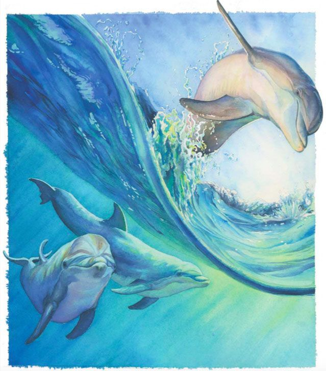 Painting Dolphins In Watercolor Dolphin Art Dolphin Painting