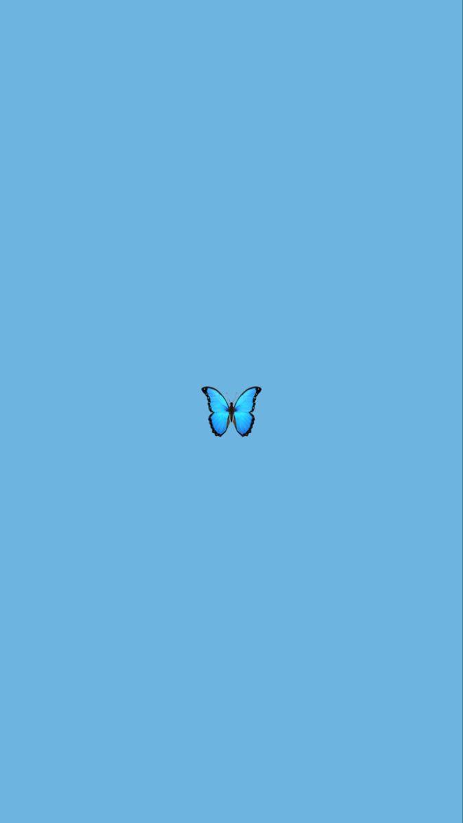 Butterfly wallpaper 🦋 in 2020 | Blue butterfly wallpaper ...