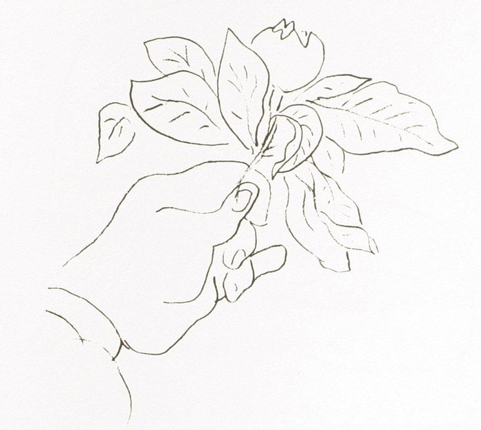 Contour Line Drawing Of Fruit : Matisse s hand holding a fruit hermitage st petersberg