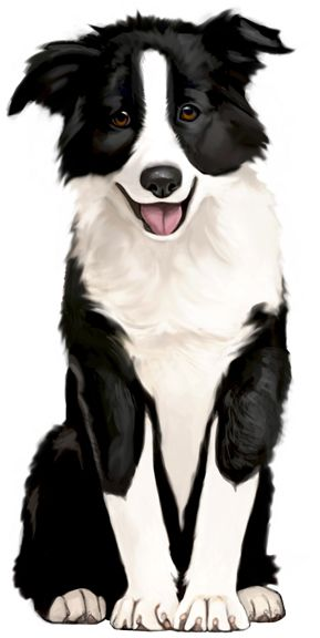 My Hand Drawn Border Collie Portrait Leave Me A Comment If You