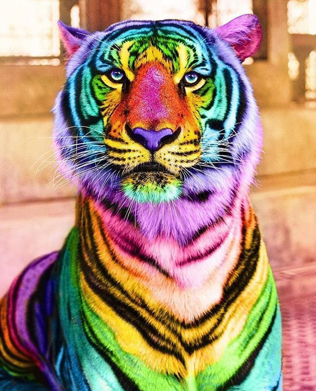 Lisa Frank Tiger But In Real Life Regram Space Ram