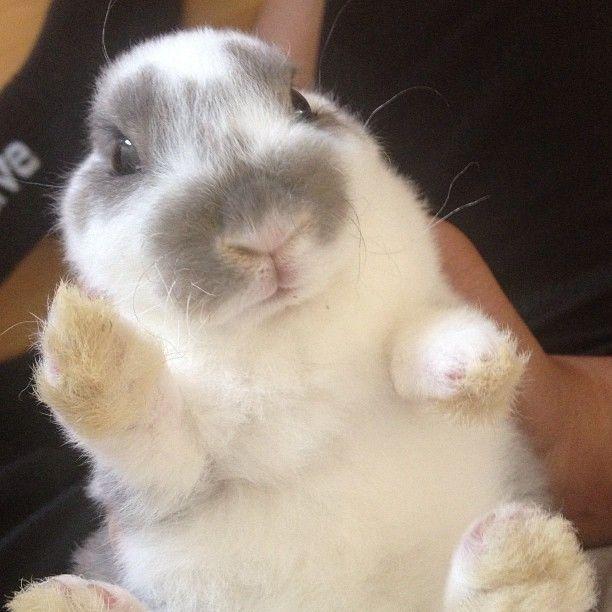 PHOTO OP: Bunny Wave Via bunny_truffles.