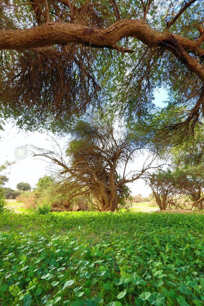 روضة خريم الرياض Plants Tree Saudi Arabia