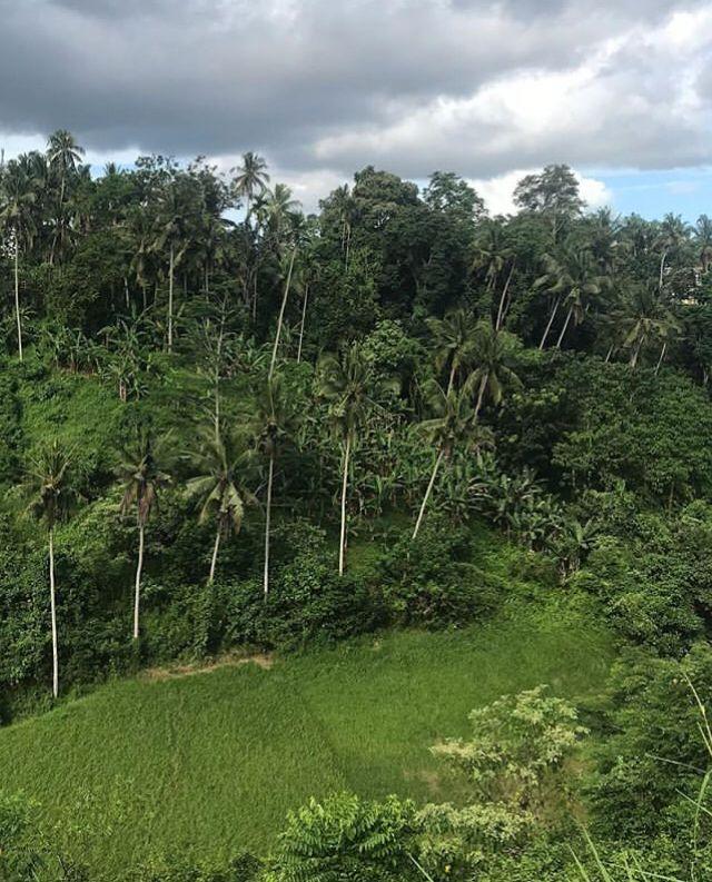 Rekomendasi Tempat Objek Wisata Ubud Bali Hiking Campuhan