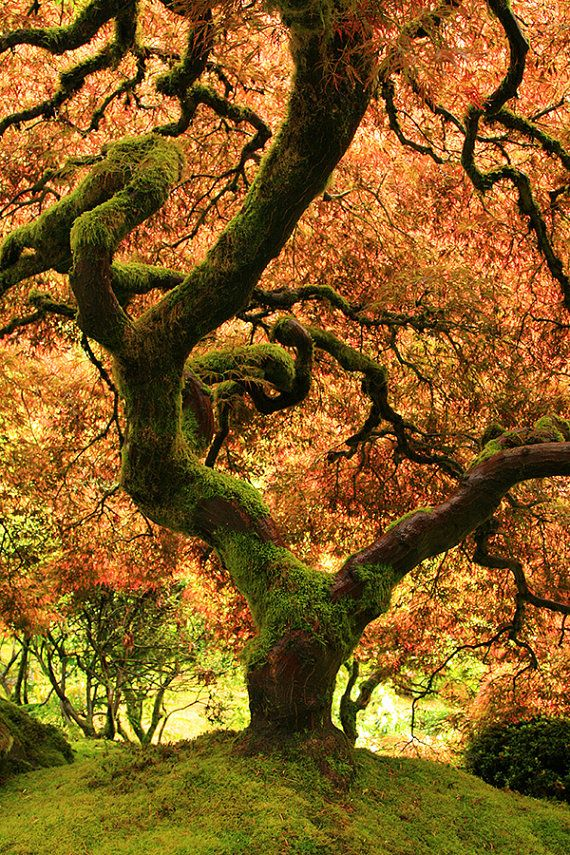 Fall Decor Japanese Garden Autumn Tree Photo Landscape Photography Fine Art Photography Oregon Photo Travel Photography Nature Photography Trees Fall Landscape Photography Landscape Photography