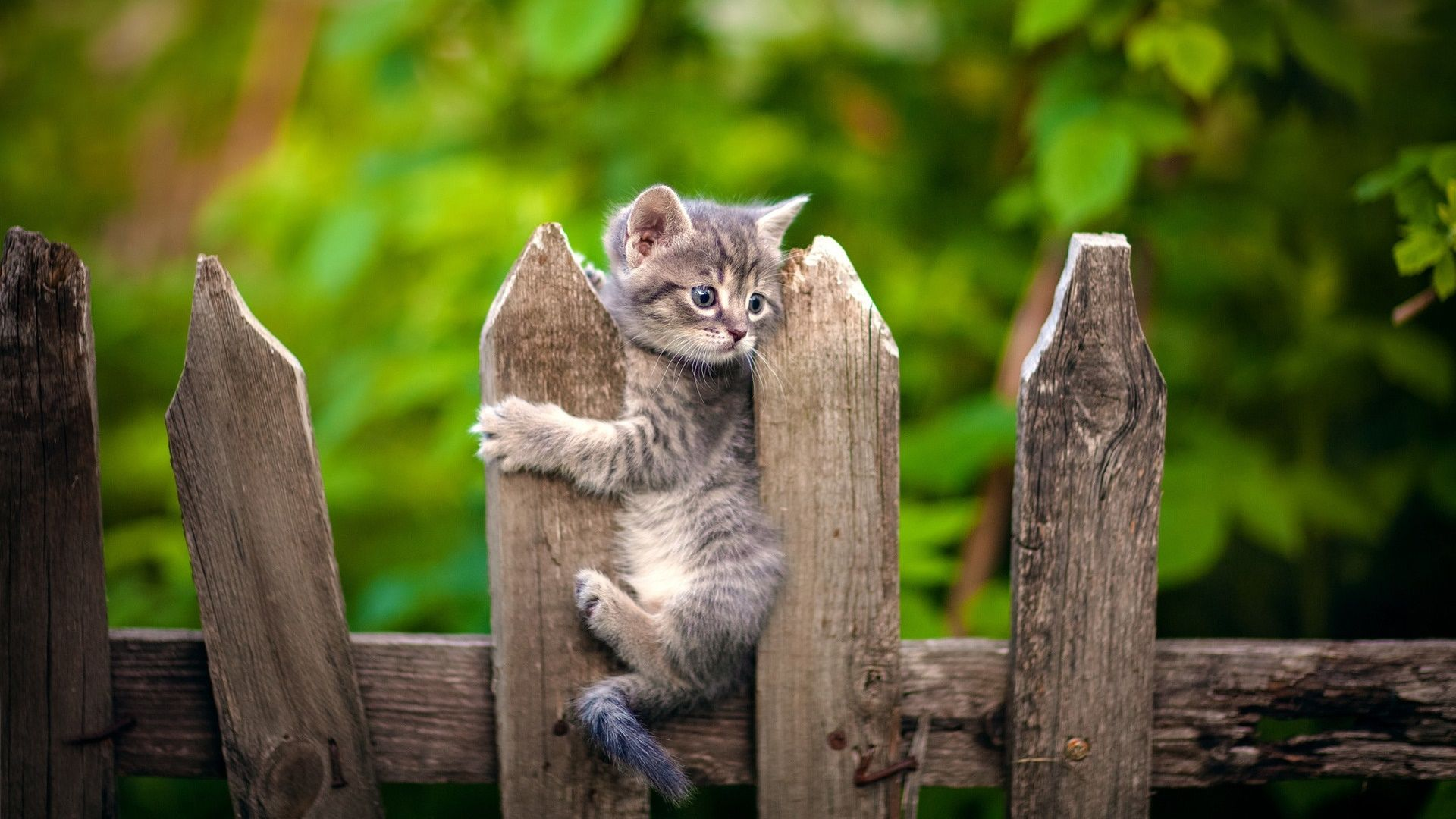 8 Mignons Chatons 8 Cute Kittens Voyage Onirique En 2020 Chaton Gris Animaux Les Plus Mignons Animales