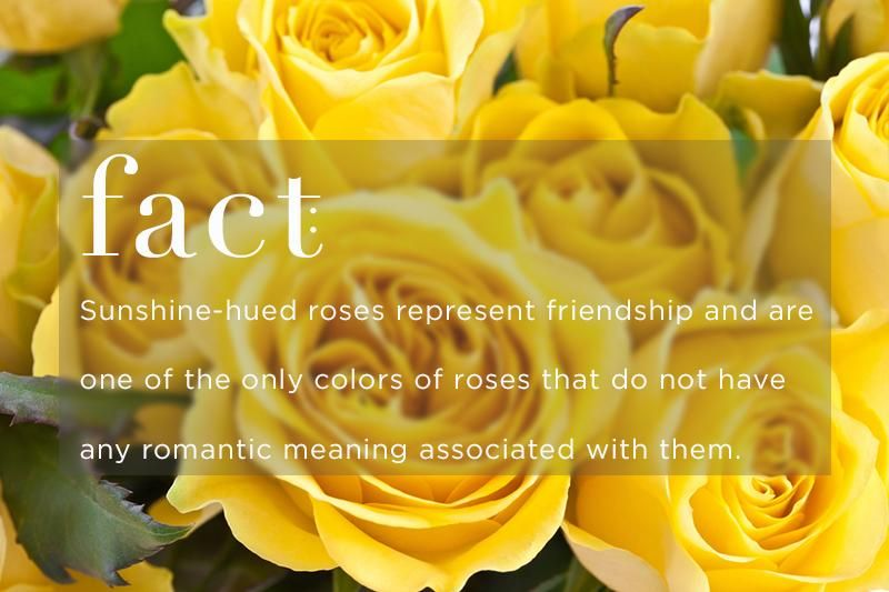 Know Your Rose Meanings Give The Right Rose Fresh By Flower