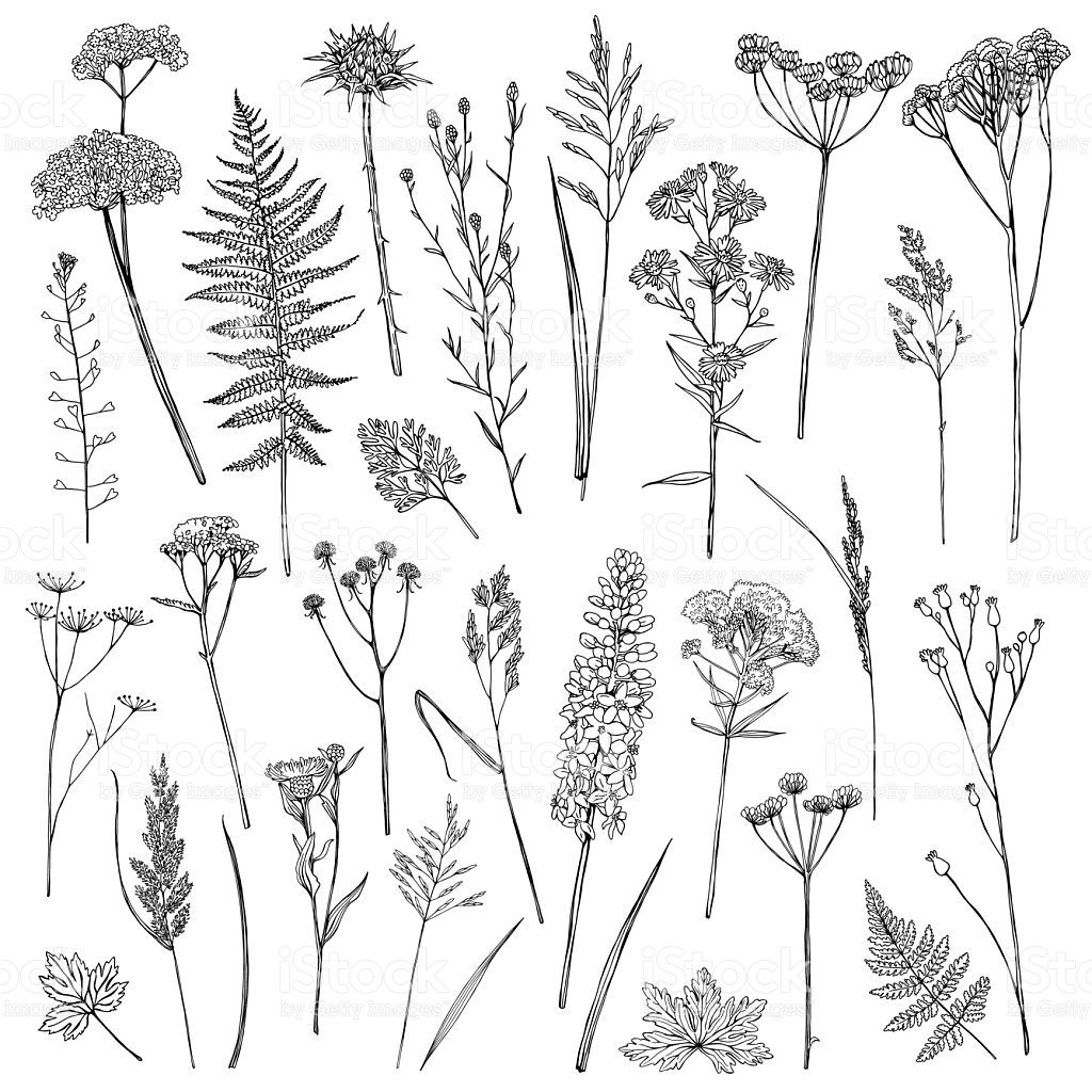 Set with wildflowers royaltyfree stock vector art stencils all