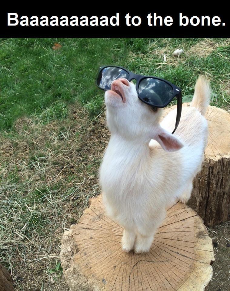 Bad To The Bone Cute Animals Adorable Animal Funny Sayings Humor