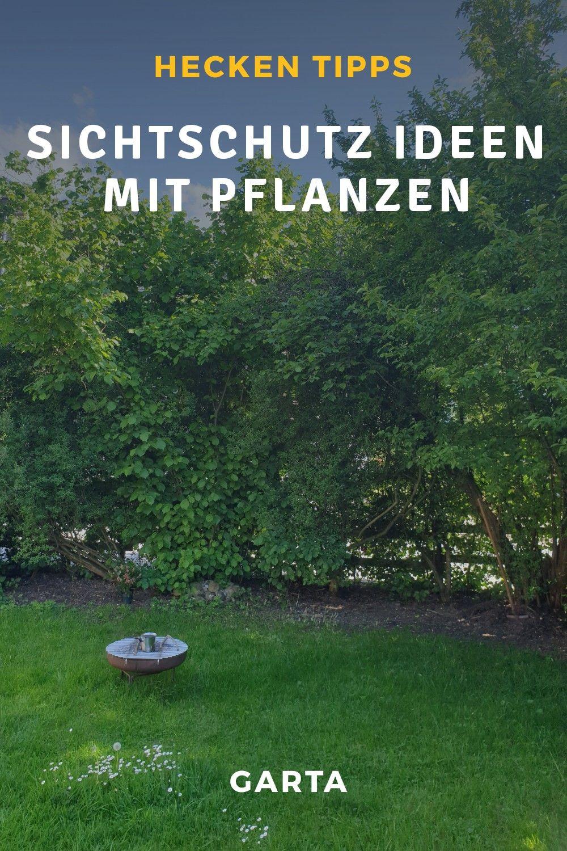 Sichtschutz Garten Ideen Mit Pflanzen In 2020 Garten Hecken Sichtschutz Garten Pflanzen