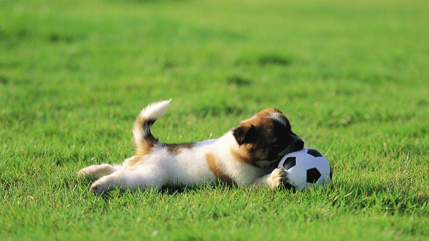 Обои Собака, grass, animals. Собаки foto 8