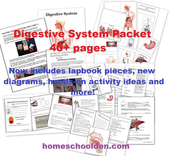 Hands On Activity: How Long is the Digestive Tract? - Homeschool Den ...