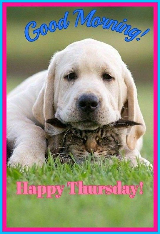 Resultado de imagen para cute stuff.com happy thursday images