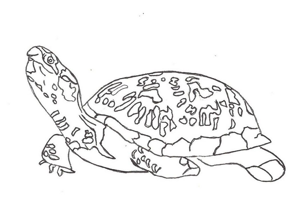 coloring page turtle full | Coloring Board | Pinterest | Turtle
