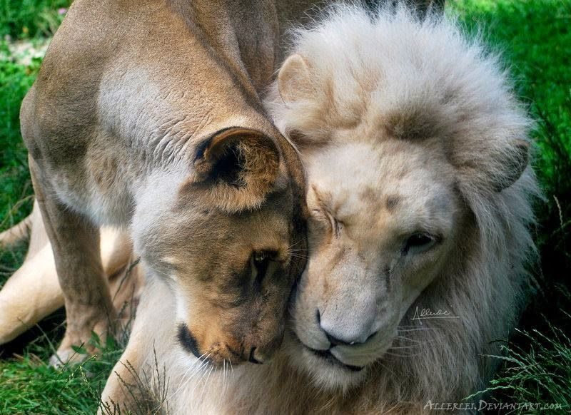 Save Our Beautiful Mother Nature: Love know every things.