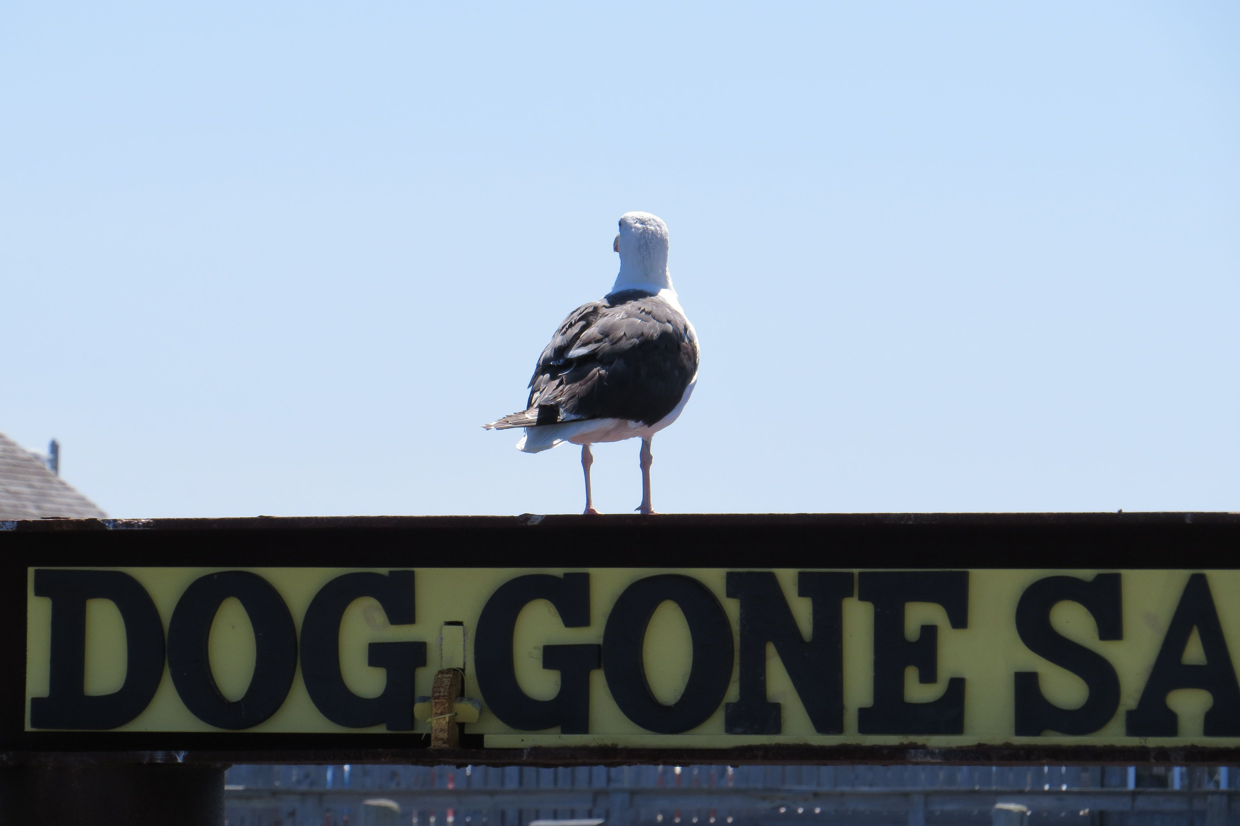 Dog gone provincetown photo by fran merton cape cod