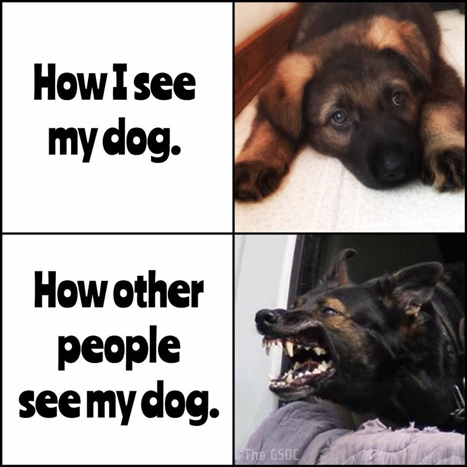 This Happens All The Time German Shepherd Funny German