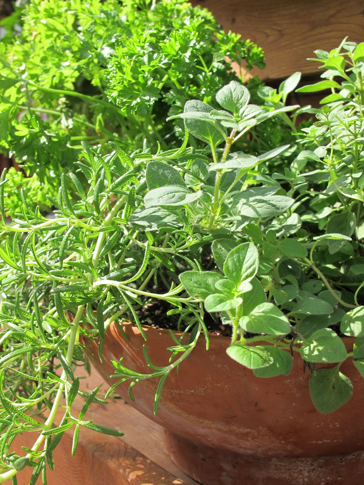 Fresh herbs feel indulgent, but keeping them in a kitchen