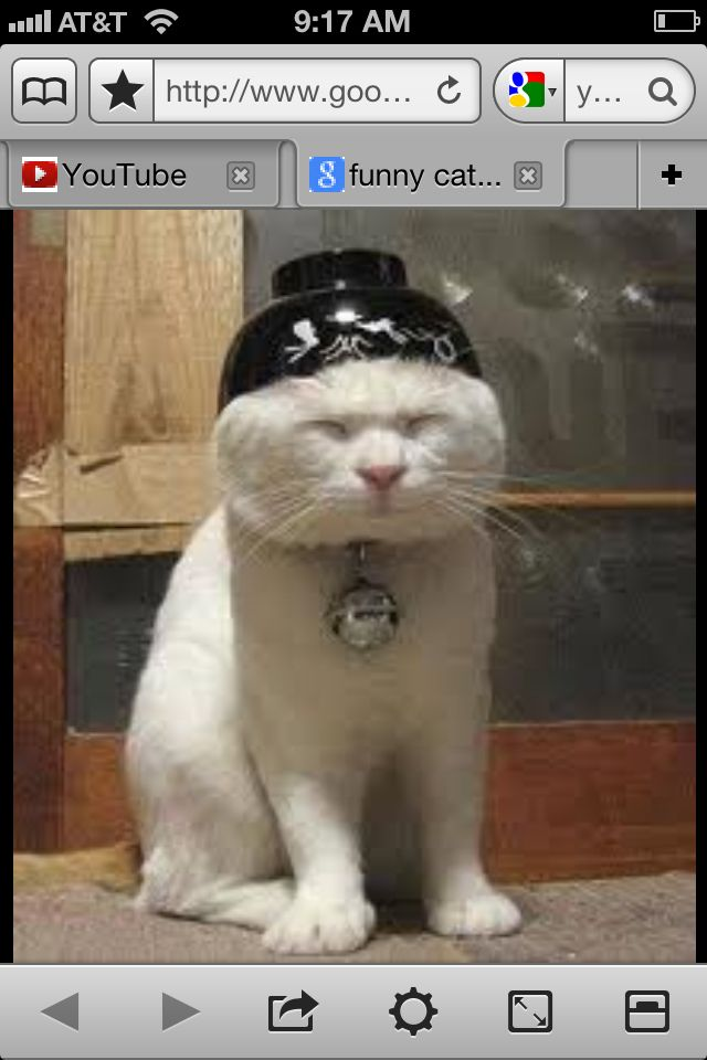Chinese Kitty Funny Cat Photos Asian Cat Funny Cat Pictures