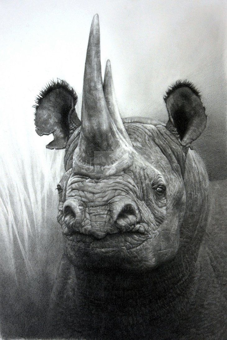 African black rhino drawing done in pencil