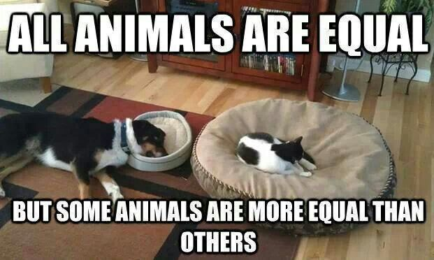 Funny Farm Animals Meme : Share this funny meme with students when reading george