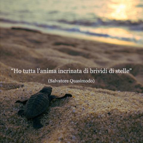 Salvatore quasimodo aforismi luoghi dell anima pinterest feelings words and thoughts - Poesia specchio quasimodo ...