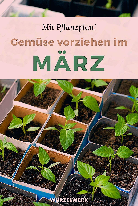 Photo of Gemüse vorziehen im März