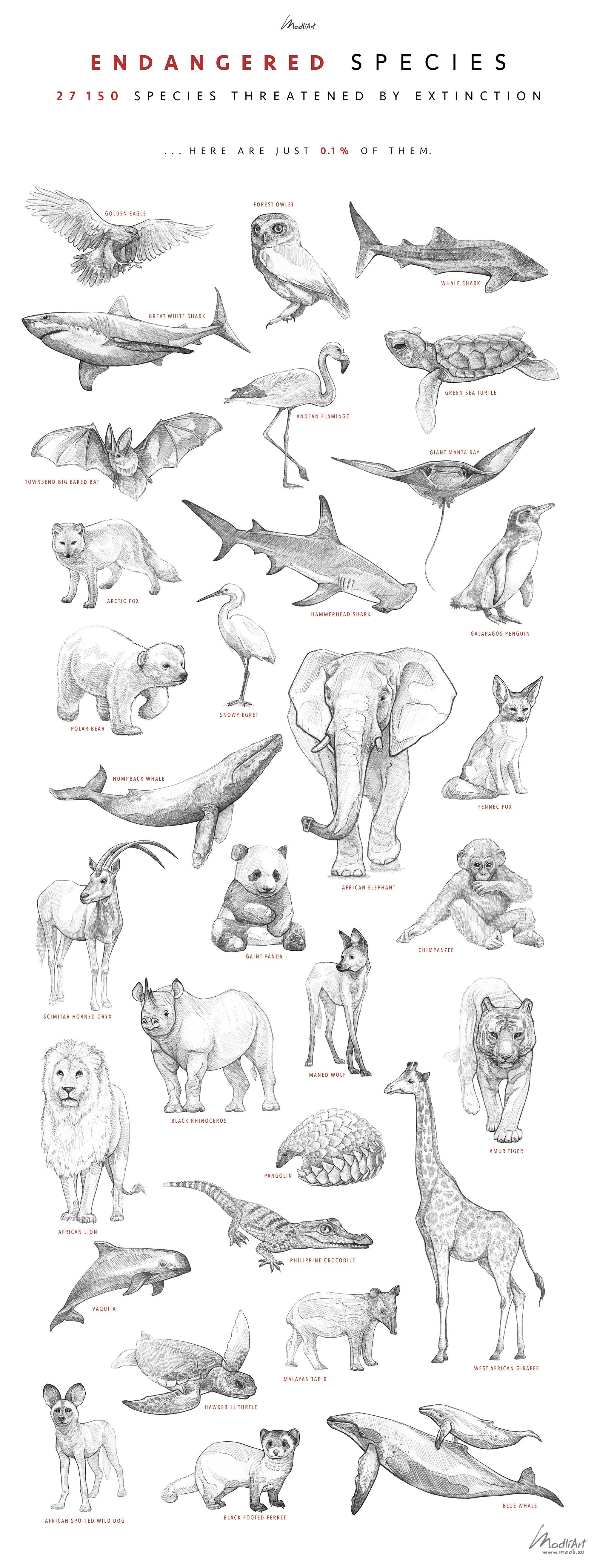 Endangered Animals Drawing : endangered, animals, drawing, Endangered, Species, Whale, Drawing,, Animal, Drawings