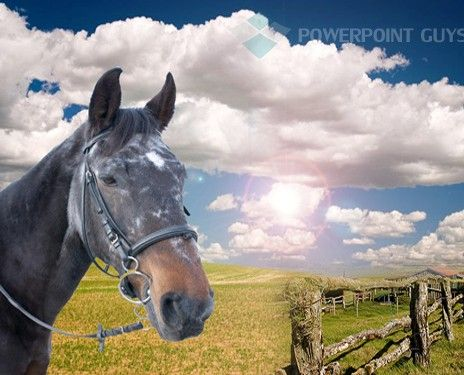 Horse Powerpoint Template This Is A Powerpoint Templates Based On