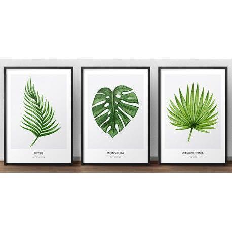 Zestaw 3 Plakatów Botanicznych Grafiki W 2019 Rośliny